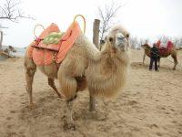 【ふるさと納税】鳥取県のおすすめ返礼品5選!砂漠と温泉は悠久の時間