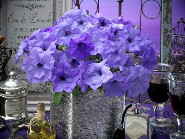 タキイ種苗がおすすめ!個性派で育てやすい花3選