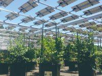国内外で注目! 営農と売電で儲かる農業をつくるソーラーシェアリング