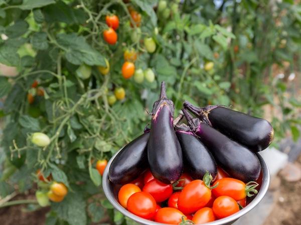 家庭菜園を楽しむポイント! 初心者の始め方・プランターの使い方