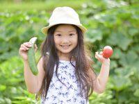 """""""野菜のテーマパーク""""が長野にオープンへ 体験・工場見学も"""