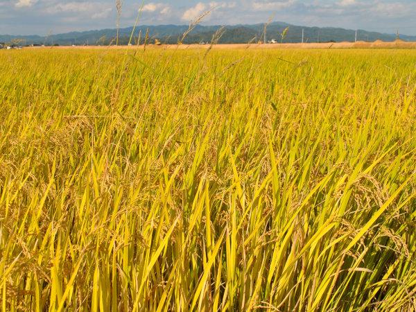 お米に目覚めた編集長が創刊!「あづまっぺ。お米を食べる通信」