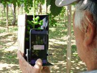 匠の技をITで見える化、伝承へ ブドウ栽培お助けアプリを農家が開発