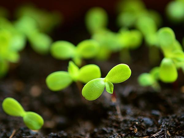 土壌改良材