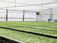 水耕栽培とは 土耕栽培や植物工場と何が違う?