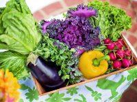 「平成」を野菜で振り返る、最も流行ったのはあの野菜!「令和」の流行予想も