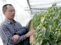 一株でピーマン900個収穫! 化学農薬に頼らない環境制御栽培【農家が選ぶ面白い農家Vol.4】