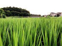街の価値が上がる⁉ 都市農地の「里山化」【進化する都市農業 #8】