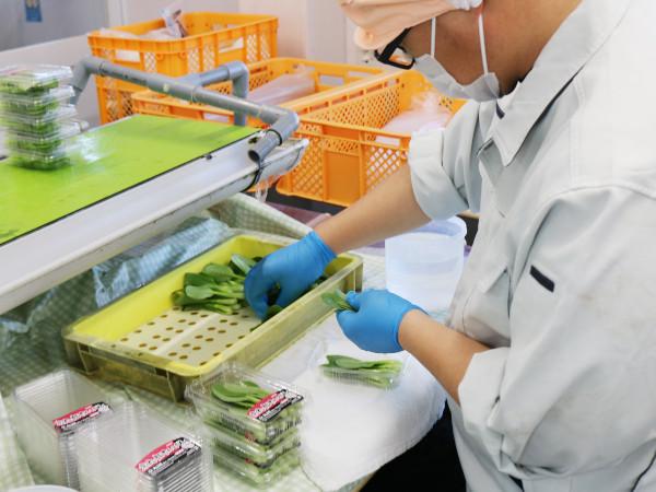 農業に改善をもたらすIT企業の特例子会社とは 「ひなりモデル」に迫る