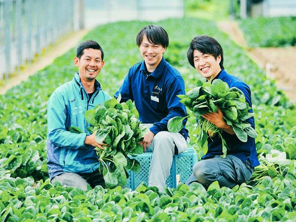 「あぁ、ホウレンソウってこんなに美味しいんだ」を実感しよう! ~佐賀県佐賀市富士町で就農研修生を募集~