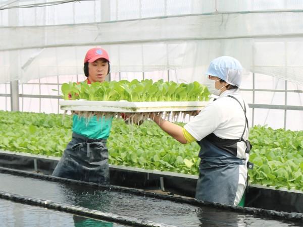 農業経営を強くする! 特効薬はユニバーサル農業