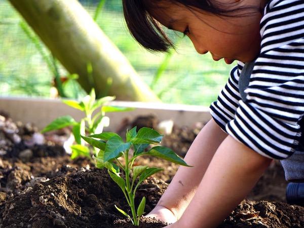 失敗しない!苗の選び方・植え方のキホン【畑は小さな大自然vol.39】
