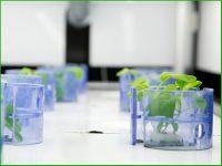 たった33日で高機能レタスが育つ。『木内計測』のオーダーメイド可能なコンテナ型植物工場