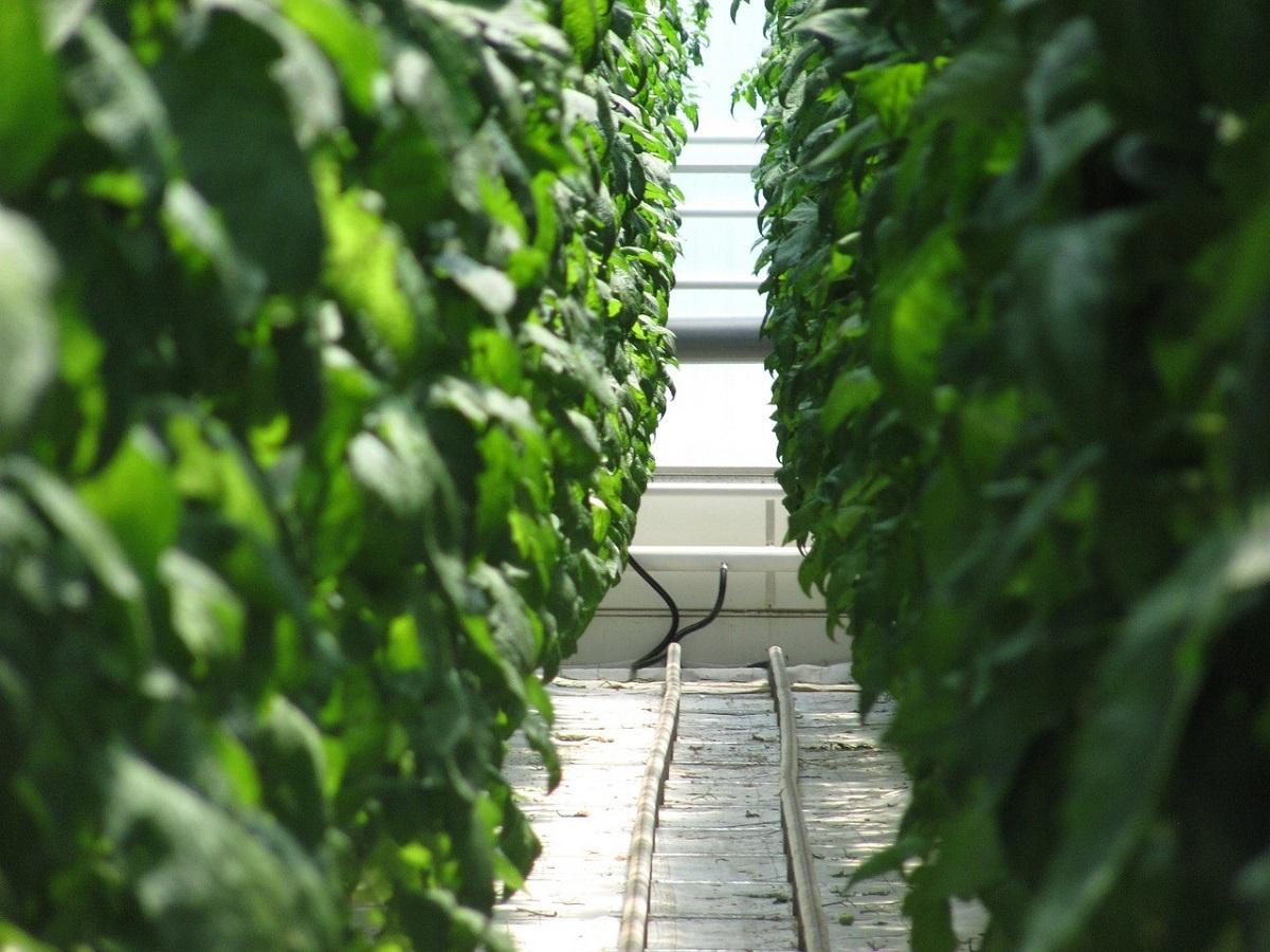 NTTグループ、初の農業法人を設立 IoT活用で生産データ蓄積