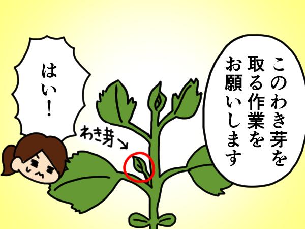漫画「跡取りまごの百姓日記」【第9話】はじめての実習