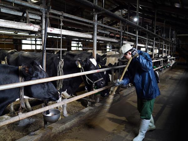 牛舎の清掃