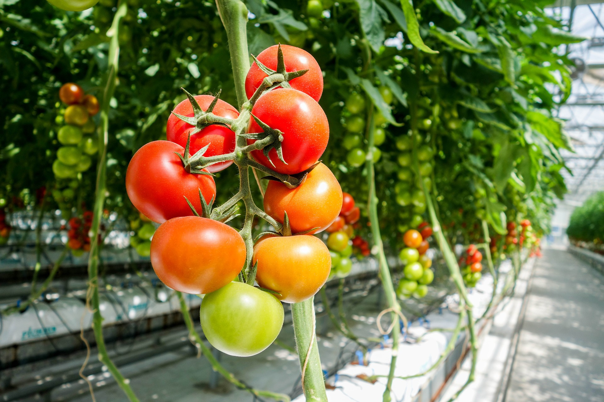 農業資材メーカーの誠和、収量予測ソフトのデモ版を無料公開