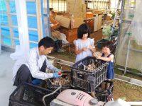 有機JASで50品種を受注生産、直売所出荷も 元生協職員の家族農業とは