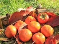 【ふるさと納税】柿(カキ)おすすめ自治体5選!歴史ある果物KAKI