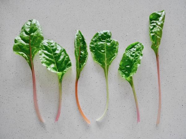 カラフルな西洋野菜 スイスチャードの栽培と食べ方【脱枯れ専のベランダ畑】
