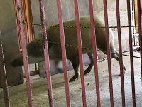 野生動物の侵入防止に効果的! ワイヤーメッシュと電気柵の正しい使い方