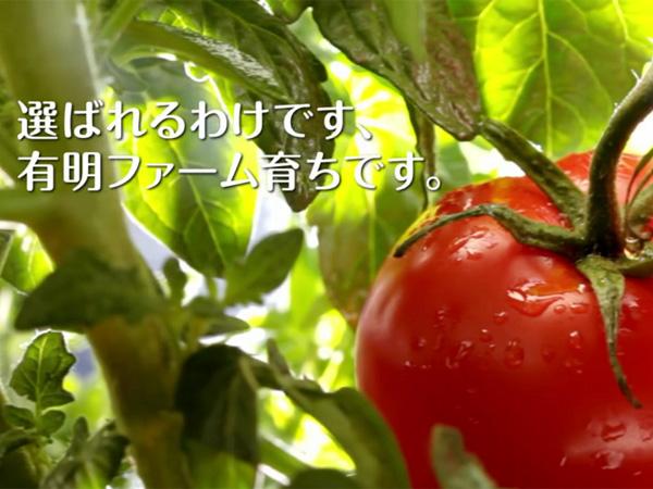 熊本から全国へ。「オランダ式のトマト独立ポット耕栽培」で農業の未来を支える!