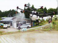 炎天下の作業負担を軽減! 田んぼに入ることなく、ドローンでカメムシ防除