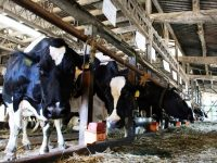 職場環境・労働環境はどうなっているの? 畜産業における女性の働き方