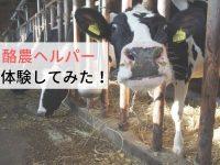 酪農のリアルに迫る! 農家ライターの酪農ヘルパー体験