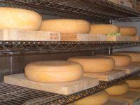 自家製の有機牛乳で、世界に誇れるオンリーワンのチーズを――冨田ファームが酪農・加工部門で新メンバーを募集