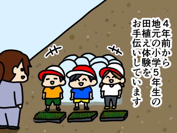 漫画「跡取りまごの百姓日記」【第13話】田植え体験