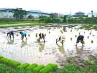 【ふるさと納税】農業体験おすすめ自治体5選!食育をはじめよう