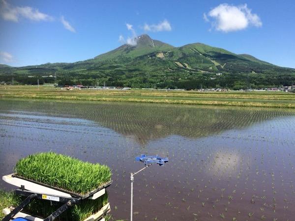 お米ライターの稲作農事暦 土作りから稲刈りまでの年間スケジュールは?