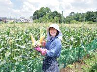 農家の声から生まれた農作業着。女性に嬉しい、かわいくて機能的な『のらスタイル』とは