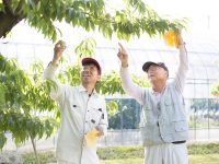 【岡山県④】土と、水と、人に魅せられて。単身、憧れのモモ農家に。