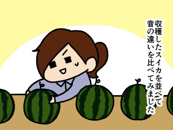 漫画「跡取りまごの百姓日記」【第17話】スイカの音比べ