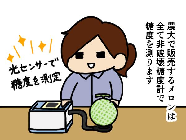 漫画「跡取りまごの百姓日記」【第18話】緊張の糖度測定