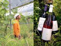 """肥料も農薬も施さない""""種あり""""ブドウ 天然酵母の地ワイン、原点を探る!"""