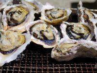 【ふるさと納税】海のミルク 牡蠣(カキ)おすすめ自治体5選!
