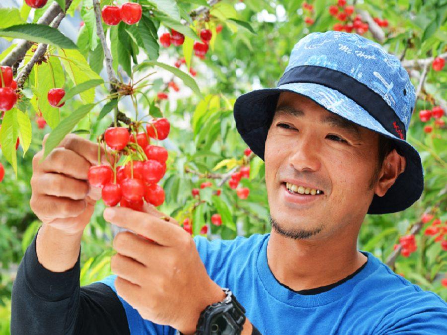 福島県・県北地域でフルーツ栽培。果樹農家の魅力に迫る