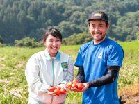 国産の需要増に応えたい! 日本デルモンテがトマトジュース用の加工用トマトの契約栽培農家を募集中