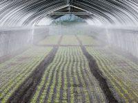 灌水チューブに新技術!『ミストエース Sナイアガラ』がやさしい水をムラなく散水