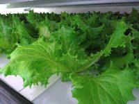 日本アジア投資、植物⼯場・オーダーメイド野菜⽣産の森久エンジに戦略投資