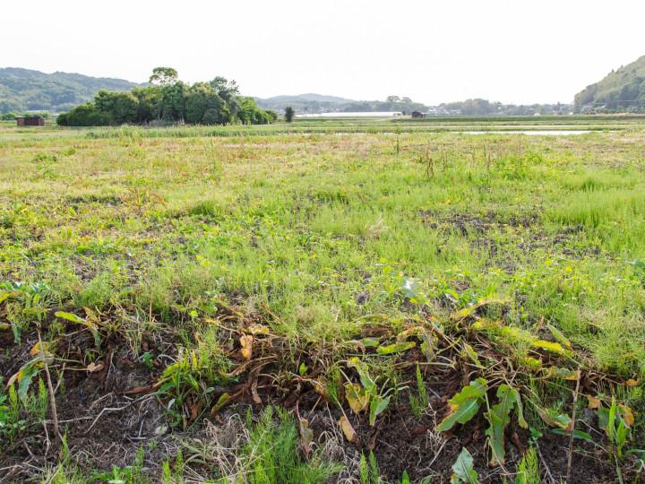 耕作放棄地とは? 放棄地の利用方法や補助金制度