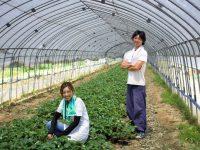 【福島県・松葉園】今だからこそ攻めの農業を! スタッフ一丸となって取り組むイチゴ栽培への挑戦