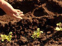 肥料の種類と相性の良い野菜
