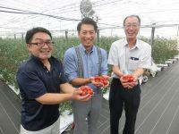 高糖度トマトの生産が期待できるフィルム農法「アイメック」は生産現場でこう使われていた!