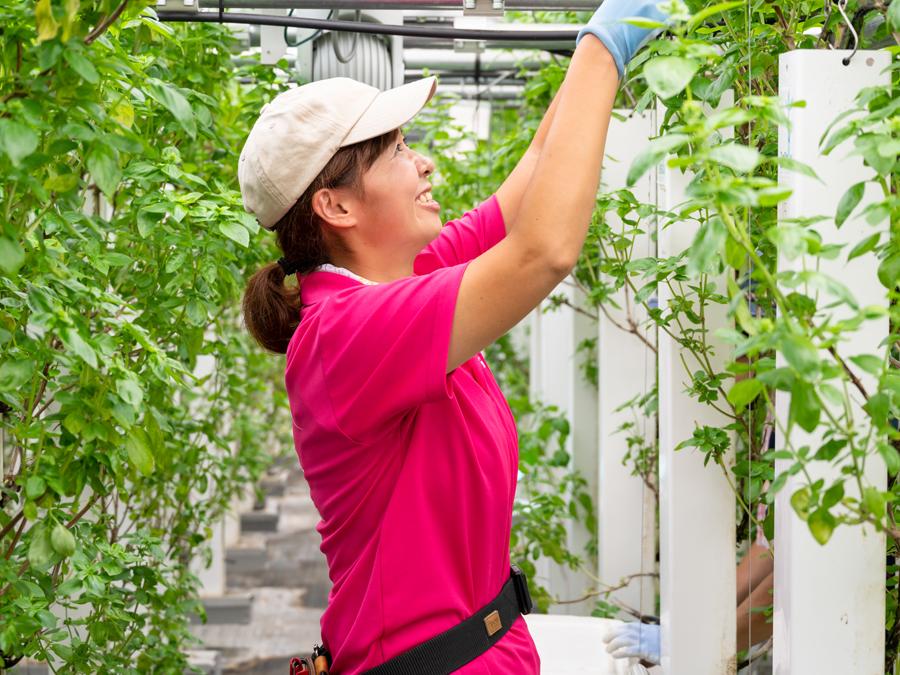 自然エネルギーと最新のIoTや栽培技術との融合で、八幡平の農業を活性化するプロジェクトが、新たなステージへ