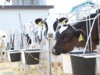 【北海道湧別町】牛に優しい酪農業を目指す『株式会社ADF』で、一緒に働きませんか