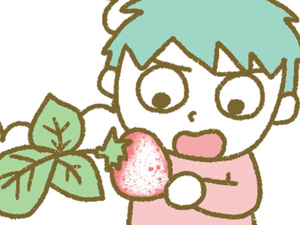 漫画「宮崎に移住した農家の嫁日記」【第78話】うどんこ病の被害